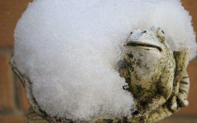 Jak nasze żaby i ropuchy przygotowują się do zimy