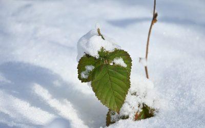 Czy śnieg jest w lesie potrzebny?