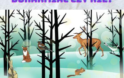 11 luty Dzień Dokarmiania Zwierzyny Leśnej